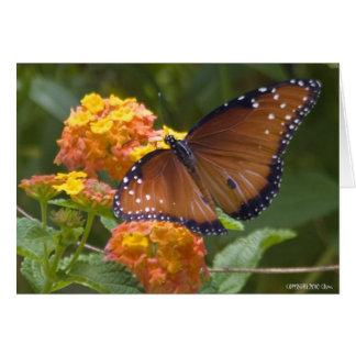 Butterflies 033 card