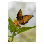 Butterflies 044 cards