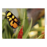 Butterflies 267 cards