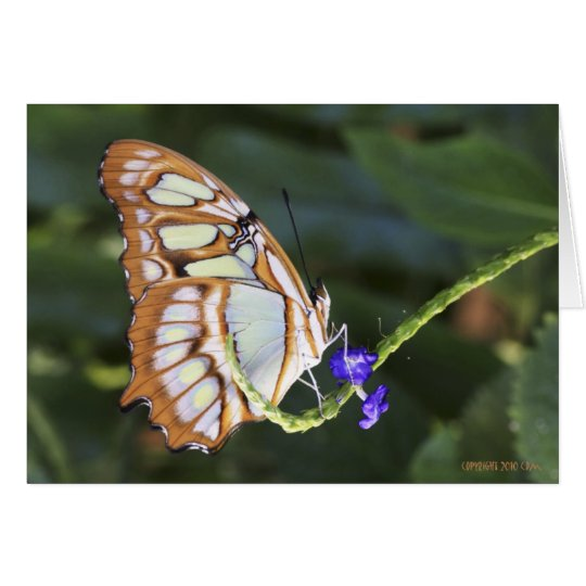 Butterflies 483 card