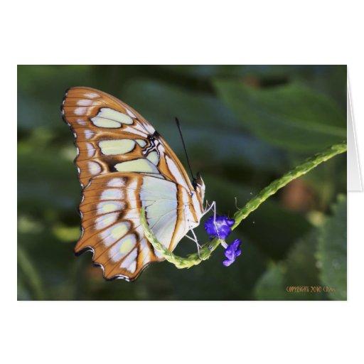 Butterflies 483 cards