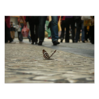 Butterflies and cobbled roads poster