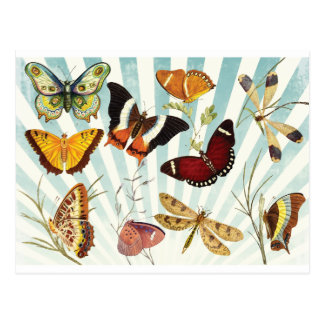 Butterflies And Dragonflies vintage Postcard