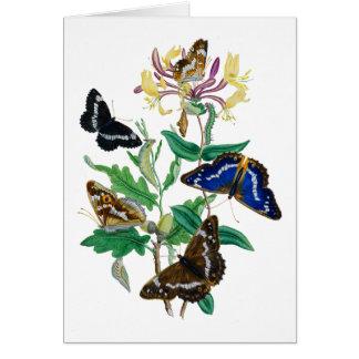 Butterflies and Honeysuckles Card