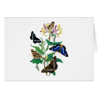 Butterflies and Honeysuckles Greeting Card
