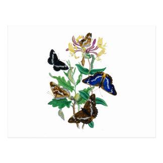 Butterflies and Honeysuckles Postcard