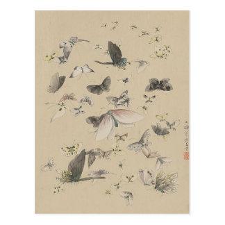 Butterflies and moths postcard