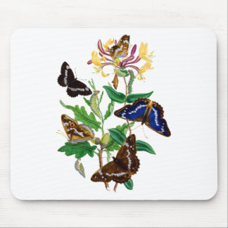 Butterflies and Red Honeysuckle Mouse Pad