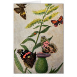 Butterflies and Thistle Greeting Card