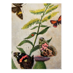Butterflies and Thistle Postcard