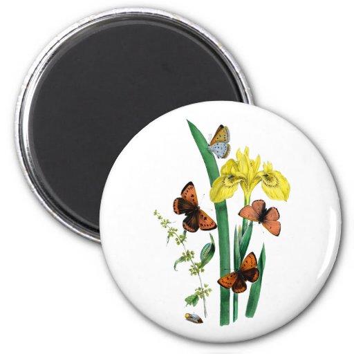 Butterflies and Yellow Iris Fridge Magnets