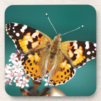 Butterflies are free coaster