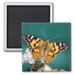 Butterflies are free fridge magnet