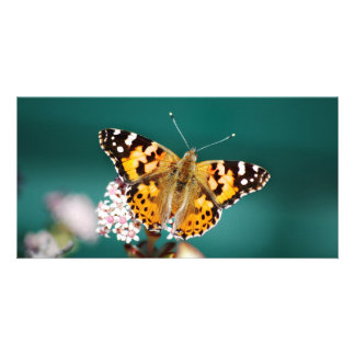 Butterflies are free photo card