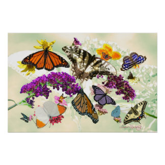 BUTTERFLIES ARE FREE PRINT