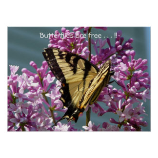 Butterflies are free . . . !! print