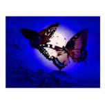 Butterflies - Butterfly Postcard