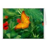 butterflies cruiser malaysia card