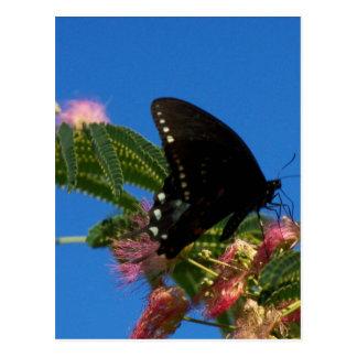 Butterflies Delight landscape scene Postcard