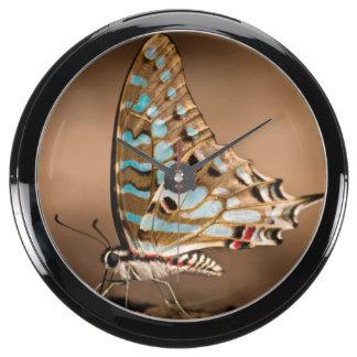 Butterflies Drinking Water, Close-Up, Punda Aqua Clock