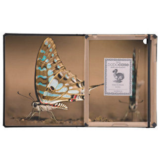 Butterflies Drinking Water, Close-Up, Punda iPad Folio Cases