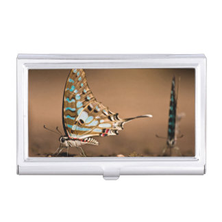 Butterflies Drinking Water, Close-Up, Punda Case For Business Cards