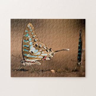 Butterflies Drinking Water, Close-Up, Punda Jigsaw Puzzles