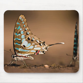Butterflies Drinking Water, Close-Up, Punda Mouse Pad