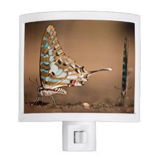 Butterflies Drinking Water, Close-Up, Punda Night Lite