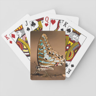 Butterflies Drinking Water, Close-Up, Punda Playing Cards