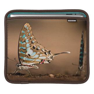 Butterflies Drinking Water, Close-Up, Punda Sleeve For iPads