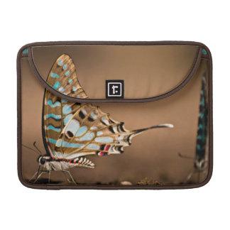 Butterflies Drinking Water, Close-Up, Punda Sleeve For MacBook Pro