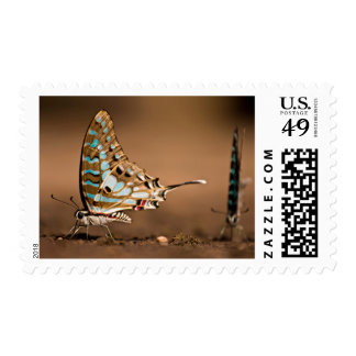 Butterflies Drinking Water, Close-Up, Punda Stamp