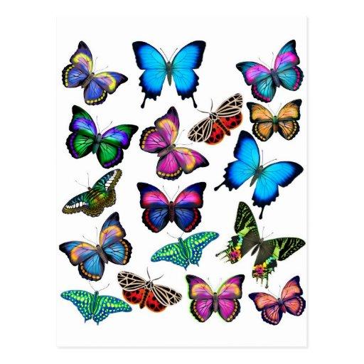 Butterflies Fluttering By Postcard