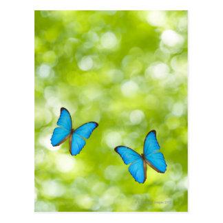 Butterflies flying, Digital Composite Postcard