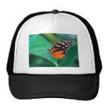 butterflies golden helicon mesh hat
