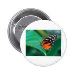 butterflies golden helicon pins