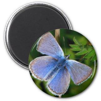 butterflies hairy blue mist 2 inch round magnet