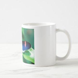 butterflies heliconius erato mug