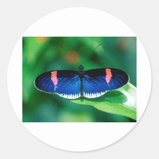 butterflies heliconius erato sticker