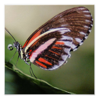 Butterflies Identification Print