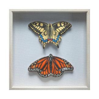 Butterflies 'in a frame' Entomology Canvas