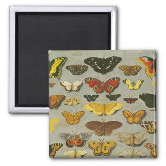 Butterflies Fridge Magnet