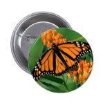 butterflies monarch butterfly 2 inch round button