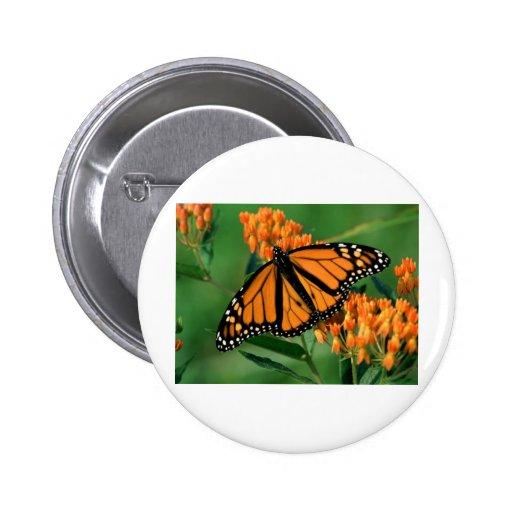 butterflies monarch butterfly pinback buttons