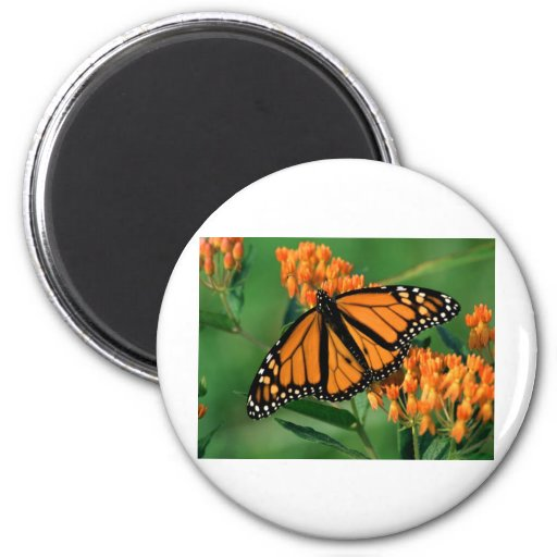 butterflies monarch butterfly refrigerator magnet
