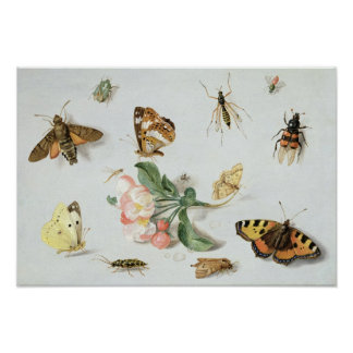 Butterflies, moths and other insects print