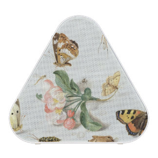 Butterflies, moths and other insects speaker