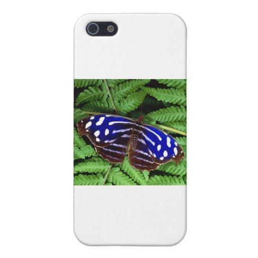butterflies myscelia cyaniris iPhone 5 cases