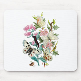 Butterflies of Summer Mouse Pad